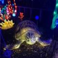 WIld Lights Turtle